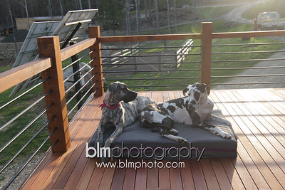 BAD-Dog-Beds-4316_05-10-16  by Brianna Morrissey  ©BLM Photography 2016