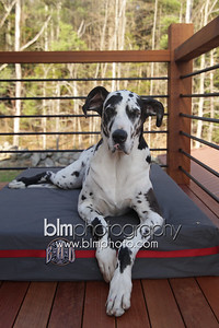 BAD-Dog-Beds-4227_05-10-16  by Brianna Morrissey  ©BLM Photography 2016