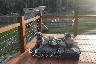 BAD-Dog-Beds-4317_05-10-16  by Brianna Morrissey  ©BLM Photography 2016