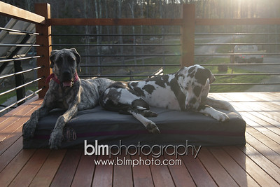 BAD-Dog-Beds-4351_05-10-16  by Brianna Morrissey  ©BLM Photography 2016