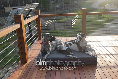 BAD-Dog-Beds-4315_05-10-16  by Brianna Morrissey  ©BLM Photography 2016