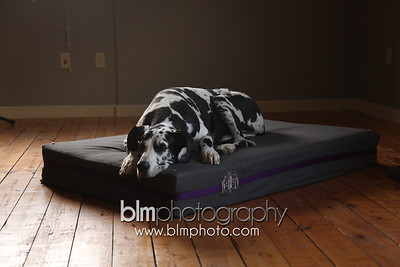 BAD-Dog-Beds-0081_05-26-16  by Brianna Morrissey  ©BLM Photography 2016