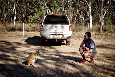 Kangaroo and man