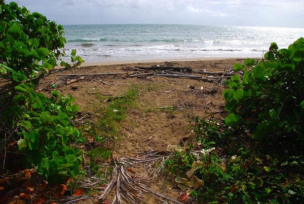 Bahia Beach recogido de basura en  playa  2012