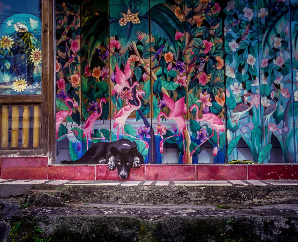 Balinese guard dog