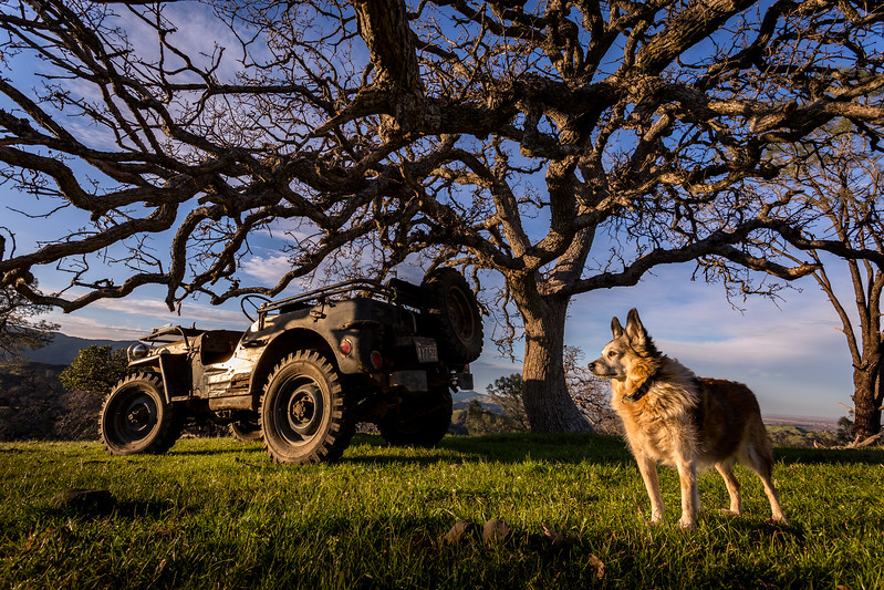 Jeep, Oak and Rocket