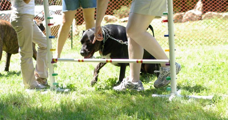 black & white dog (limbo)
