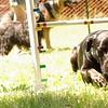 black dog limbo the games