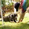 black dog limbo games