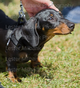 Photography Lester Milbank  -0639