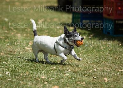 Photography Lester Milbank  -0636