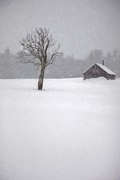 lone winter apple tree with a friend #3