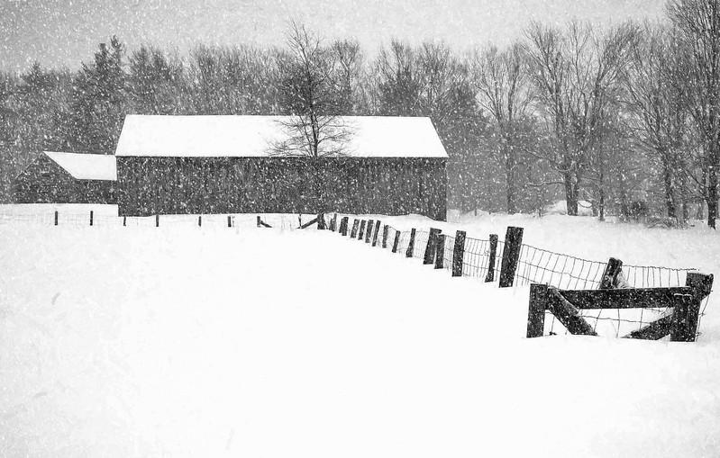 Muster field Farm , N.Sutton, NH snow fence
