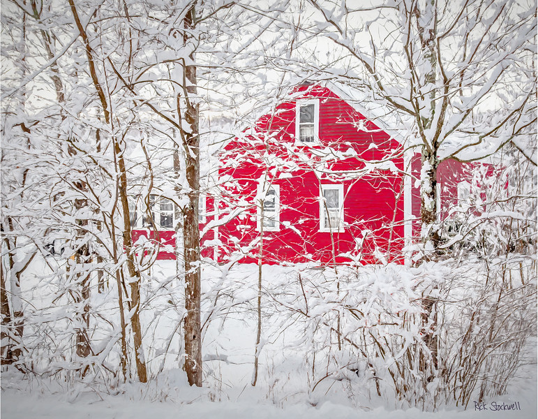 Winter red and white