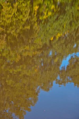 _ASF1689 REFLECTION