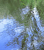 Ripples on a pond kept me entertained for the better part of one lazy afternoon.