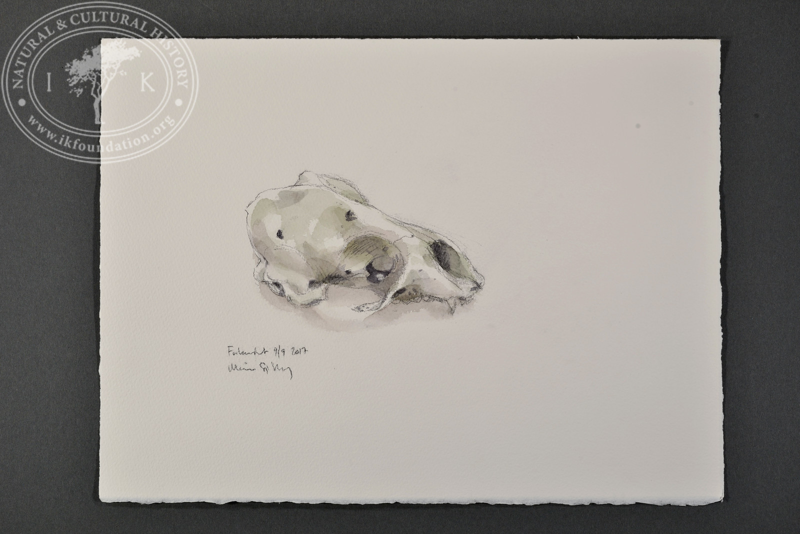 "Seal skull, Forlandet, Svalbard | 9.9.2017 |  ""I want to convey what I see with immediacy and simplicity to make the viewer feel present on the Arctic scene."" 