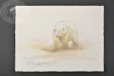 "Polar bear at Bellsund, Svalbard | 5.9.2017 |  ""I want to convey what I see with immediacy and simplicity to make the viewer feel present on the Arctic scene."" 