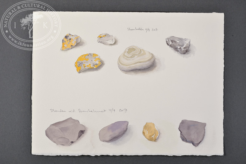 """Rock samples, Skansbukta and the beach at Svenskehuset, Svalbard 