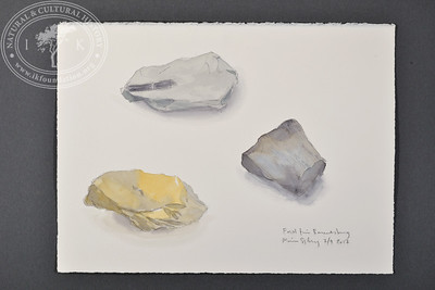 """Fossils from Barentsburg, Svalbard 