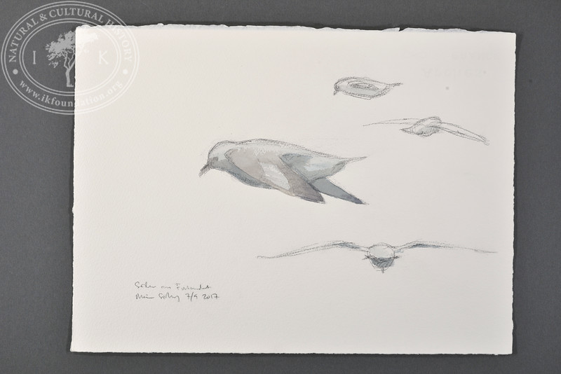 """Fulmars south of Forlandet, Svalbard   7.9.2017   """"I want to convey what I see with immediacy and simplicity to make the viewer feel present on the Arctic scene.""""   Måns Sjöberg."""