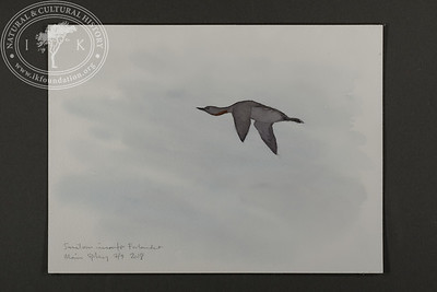 "Red-throated loon passing by in the Forland Strait | 7.9.2018 | ""I want to convey what I see with immediacy and simplicity to make the viewer feel present on the Arctic scene."" 
