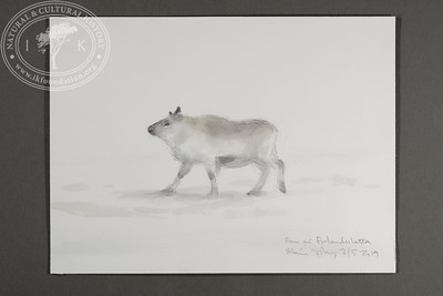 "Reindeer passing by the site of the Field Station at Prins Karls Forland | 7.5.2019 | ""I want to convey what I see with immediacy and simplicity to make the viewer feel present on the Arctic scene."" 