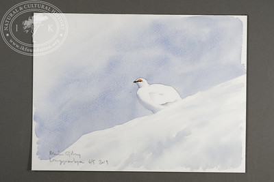 "Male ptarmigan in the Longyear Valley | 6.5.2019 | ""I want to convey what I see with immediacy and simplicity to make the viewer feel present on the Arctic scene."" 