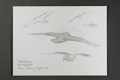 "Fulmar study at Endeflaket | 24.9.2019 | ""I want to convey what I see with immediacy and simplicity to make the viewer feel present on the Arctic scene."" 