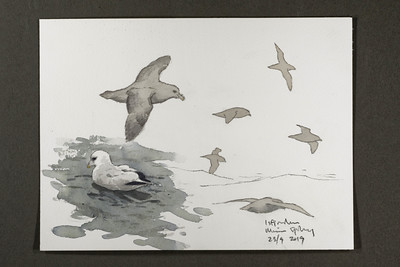 "Fulmars in Isfjorden | 23.9.2019 | ""I want to convey what I see with immediacy and simplicity to make the viewer feel present on the Arctic scene."" 