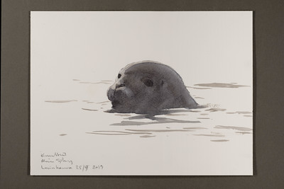 "A curious harbour seal in Levinhamna | 25.9.2019 | ""I want to convey what I see with immediacy and simplicity to make the viewer feel present on the Arctic scene."" 