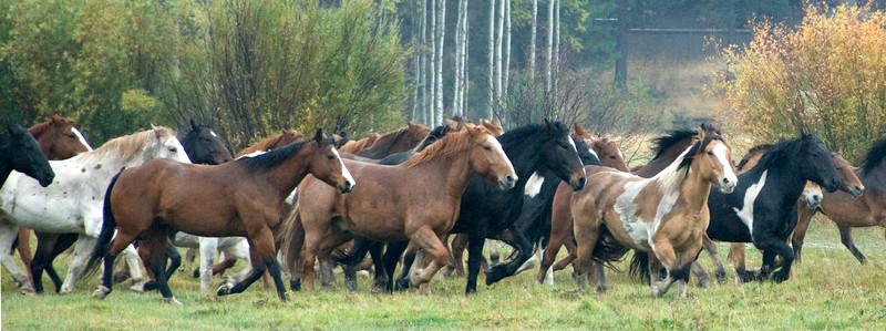 2010-1009-Horses-BBR-fall-synchronized-keown kate_DSC2615C