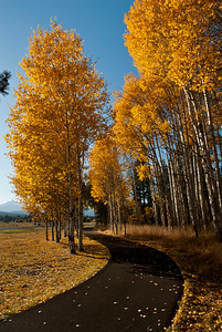 Fall Aspens Bike Path Rick Schafer2006_DSC0039