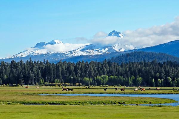 BBR-Horses-in-Meadow-N+S Sisters-KateThomasKeown-KTK_DSC7906-5000