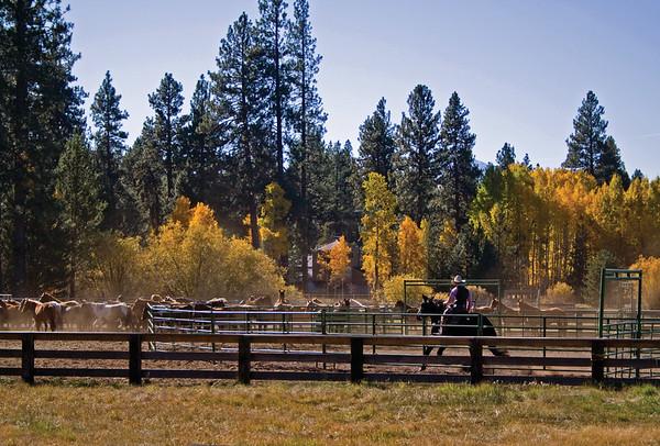 BBR-Horses-Cowboy-KateThomasKeown-KTK-IMG_3772