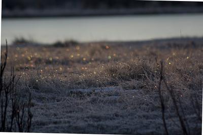 w_MG_0028-Fairy-Sparkles