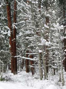 wintertrees1104