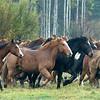 Horses-all-together-now_KateThomasKeown_DSC2615