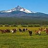 Horses running -on their way to work Mt Washington Kate Thomas Keown_DSC6041-11x14 - Copy