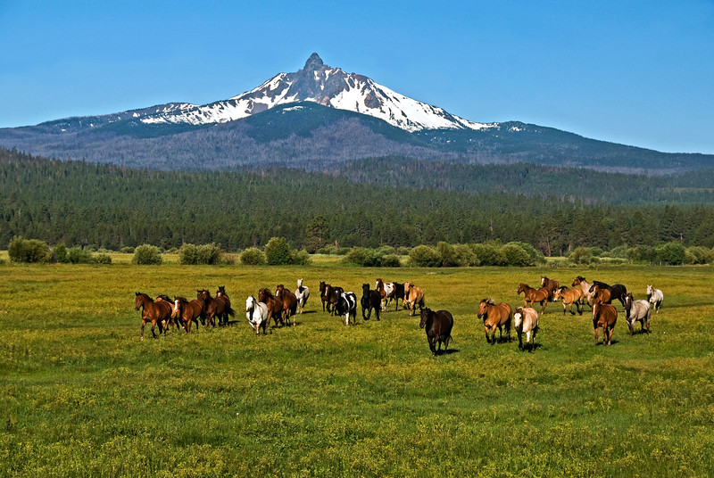Horses running -on their way to work  Mt Washington Kate Thomas Keown_DSC6041
