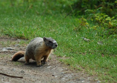 Turns out there were a whole bunch of marmots living at the lake, but they all seemed to be very skittish and would dash off at the slightest noise or movement.