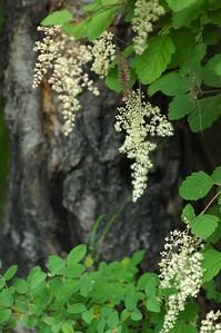One of the few flowering shrubs near the lake.