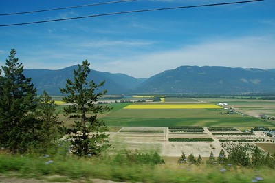 On the drive from Kootenay Bay to Creston we kept seeing these bright yellow fields.  If anyone knows what they're growing please let me know.