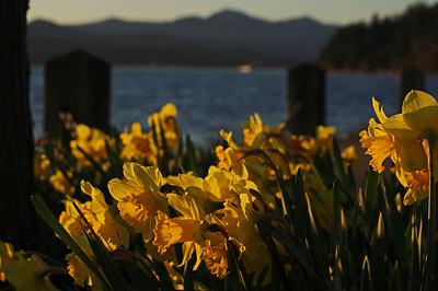 BC Spring 2014
