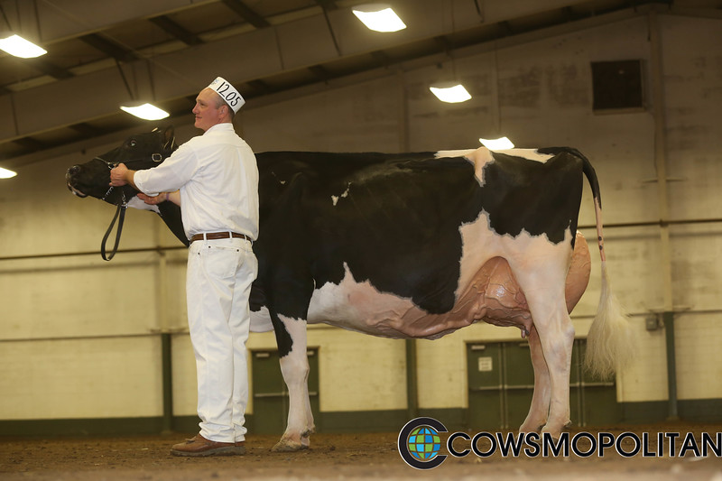 BCSpring17_Holstein_IMG_5942