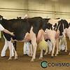 BCSpring17_Holstein_1M9A9461