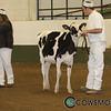 BCSpring17_Holstein_1M9A8675