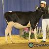 BCSpring17_Holstein_1M9A8676