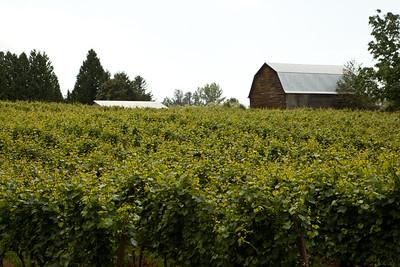 Township 7 Vineyards Langley IMG_2006