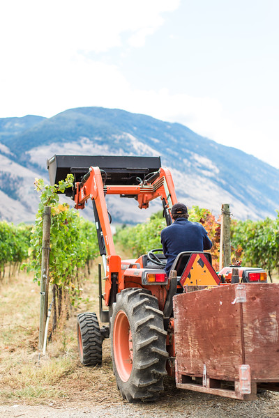 20160922_BC Wine Institute - Similkameen Region - 1041.jpg